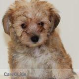 Dog Walker, Pet Sitter in Palm Bay