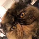 Pet Lover Seeking Petsitting/Walking Opportunity in Marshall