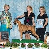 Pet Care Provider in Olivehurst
