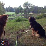 Pet Sitter in Chapel Hill