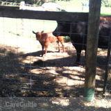 Dog Walker, Pet Sitter in Marysville
