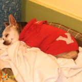 Dog Walker, Pet Sitter in La Porte