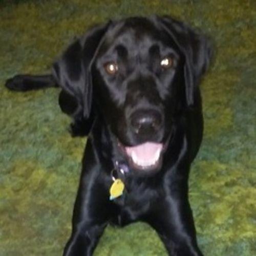 Pet Care Provider Carol L's Profile Picture