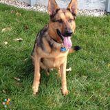 Dog Walker, Pet Sitter in Sewell