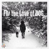 Dog Walker, Pet Sitter in Bowmanville