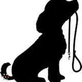 Dog Walker, Pet Sitter in Canoga Park