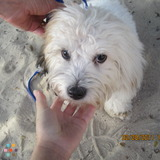 Dog Walker, Pet Sitter in Sykesville