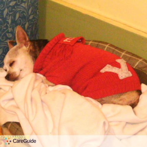 Pet Care Provider Heather Winslett's Profile Picture