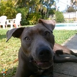 Dog Walker, Pet Sitter in Pompano Beach