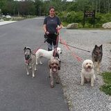 Professional Dog Walker and Handler Servicing Providence and Kent County