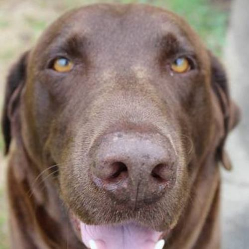 Pet Care Provider Meredith A's Profile Picture