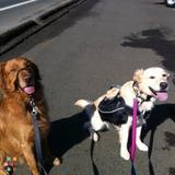 Dog Walker Job in Astoria