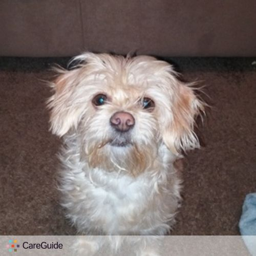 Pet Care Provider Nadia Hodges's Profile Picture