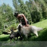 Dog Walker, Pet Sitter in Saskatoon