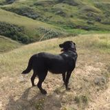 For Hire:Pet Sitter in Coaldale