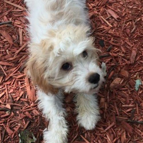 Pet Care Provider Brooke P's Profile Picture