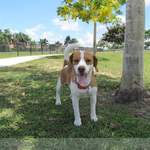 Pet Care Provider Vanessa Giraldo's Profile Picture
