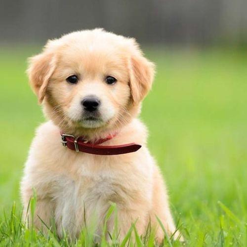Pet Care Provider Naomi P's Profile Picture