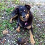 Dog Walker, Pet Sitter in Orillia