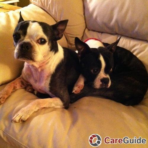 Looking for a pet sitter in Tinley Park IL - Dog Walker Job, Pet
