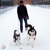 Dog Walker, Pet Sitter in Grand Rapids