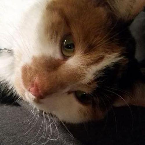 Pet Care Job Kelly O's Profile Picture