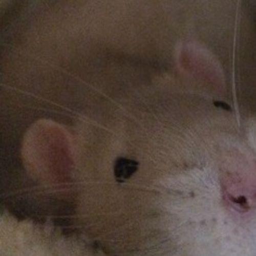 Pet Care Provider Sara Lewis's Profile Picture