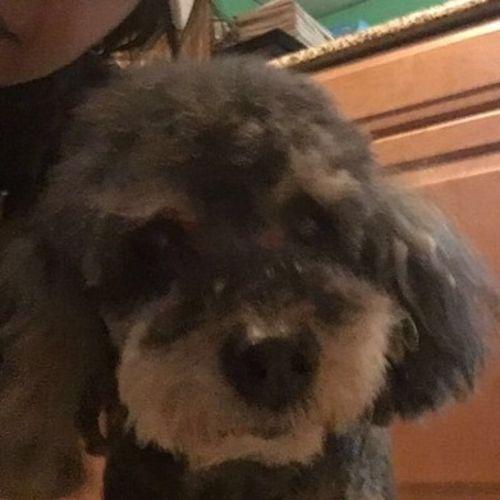 Pet Care Provider Magda R's Profile Picture