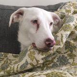 Archived - - Toronto, Ontario Pet Sitter Posting - Dog Walker Job