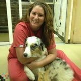 Dog Walker, Pet Sitter in Deerfield Beach