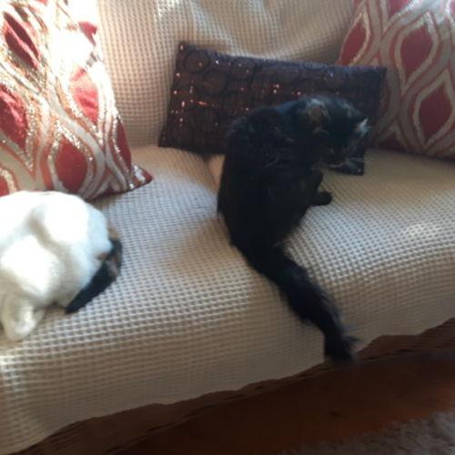 Pet Care Provider Margret B's Profile Picture