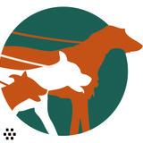 Dog Walker, Pet Sitter in Mesa