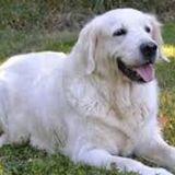 Pet Care Provider Needed ASAP!