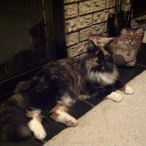 Pet Care Provider Kassie B's Profile Picture