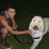 Mount Vernon, New York Animal Lover