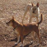 Trustworthy Dog Sitter in Sanford, NC
