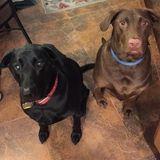 Dog Walker, Pet Sitter, Kennel in Phoenix