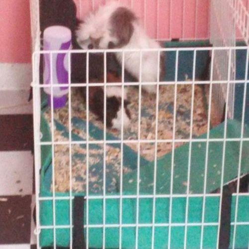 Pet Care Provider Monserrate Collazo Gallery Image 2