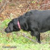 Dog Walker, Pet Sitter in East Greenwich