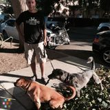 Dog Walker in West Hollywood