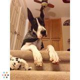 Dog Walker, Pet Sitter in Murrieta