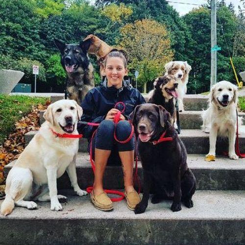 Pet Care Provider Jessica R Gallery Image 2