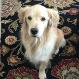 Dog sitter needed for spring break April 12-20th 2019