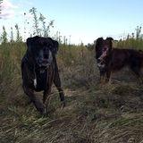 Dog Walker Job in Glencoe