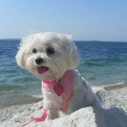 Pet Care Provider Katie C Gallery Image 3