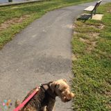 Dog Walker, Pet Sitter in Chestertown
