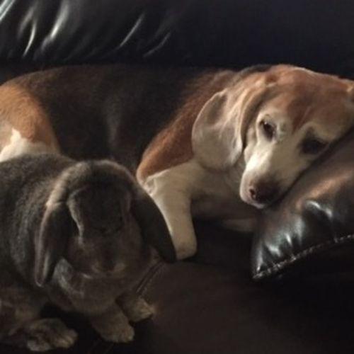 Pet Care Provider Rosanne Manwell's Profile Picture