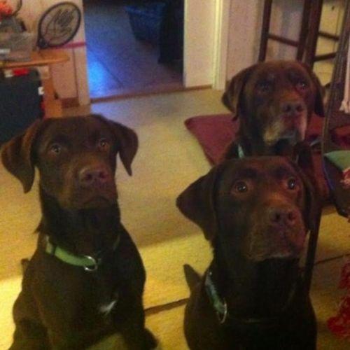 Pet Care Provider Elena Ovesson Gallery Image 1