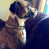 Dog Walker Job, Pet Sitter Job in Denver