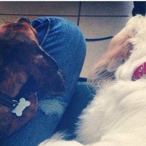 Pet Care Provider Tiffany Y Gallery Image 1